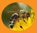 Prodejna včelích produktů a výroba dřevěných výrobků pro včelaře - Luboš Luňák - kvalitní medovina, medové pivo a víno, včelí kosmetika - Týniště nad Orlicí, Rychnovsko