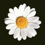 Květinové studio Kopretina - Ivana Fialová - kvalitní květinářství, svatební květinový servis, gratulační kytice, smuteční vazba, krásné květiny, květinové interiérové dekorace - Břeclav