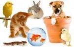 Zoomarket - kvalitní chovatelské potřeby, krmiva, antiparazitární přípravky, kosmetika a nutriční doplňky pro zvířata - Mikulov, Břeclavsko